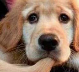 狗狂吠救老人性命 狗为何通人性?资讯生活